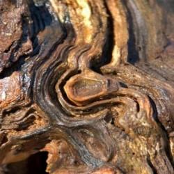 AGARWOOD - ароматно масло