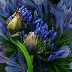 Парфюм MP02 Velvet Hyacinth