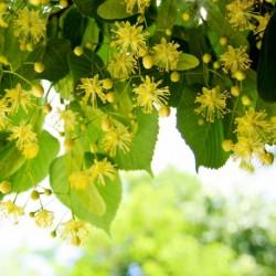 Парфюм MP06 Sunshine linden Blossom