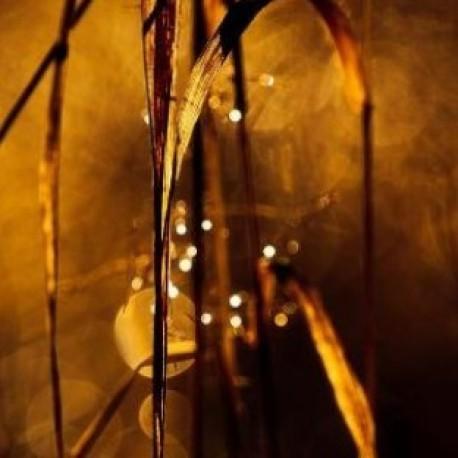 ЧЕРЕН МУСКУС – ароматна бленда – 5мл