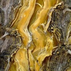 Етерично масло Сандалово дърво