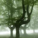Дървесен