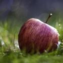 Плодов